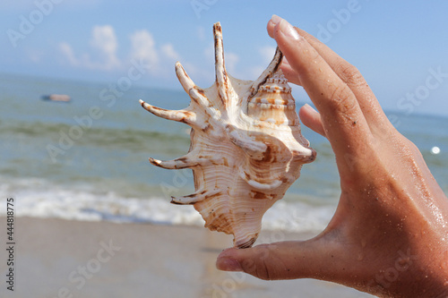 Wallpaper Mural Seashells on a tropical seashore lying on the golden sand under the hot summer sun with copyspace