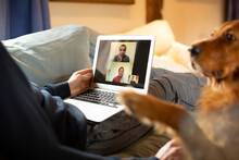 Man With Dog Video Conferencing With Colleagues On Laptop From Home