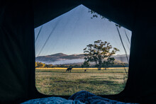 View Of Kangaroo And Scenic Landscape From Inside Tent, Australia