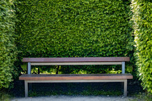 Empty Park Bench With Hedge