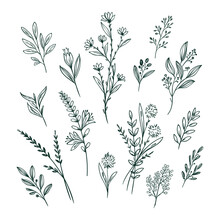 Hand Drawn Flower Collection Vector