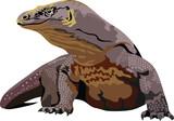 Komodo Dragon Indonesian Reptile  Animal