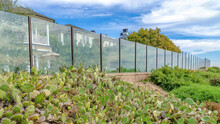 Pano Cactus And Wild Green Plants Growing Outside The Glass Fence Of Houses