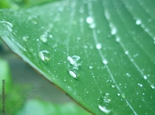 dew on leaf Fotobehang