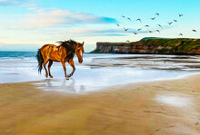 Horse Running Along The Ocean Coast.