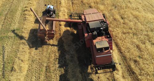 Wallpaper Mural La trebbiatrice scarica il grano nel serbatorio del trattore