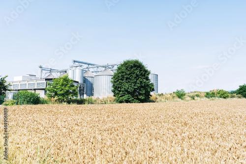 Wallpaper Mural Campo di grano e silos di raccolta