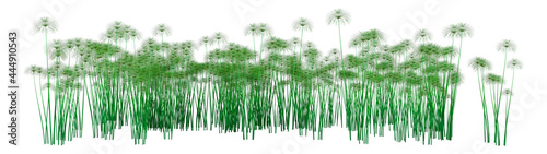 Photo 3D Rendering Papyrus Plants on White