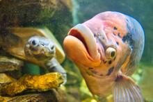 熱帯魚と亀