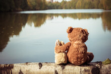 Lonely Brown Teddy Bear Hugs Fluffy Stuffed Toy Bunny Sitting On Fallen Birch Tree Trunk Near Tranquil River On Autumn Day Backside View