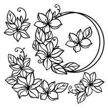 CLEMATIS LINE Art Wedding Monochrome Collection From Flowers And Bouquets In Frame Openwork Contours For Print Cartoon Cliparts Vector Illustration Set