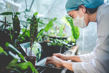 Woman Botanist Working In Greenhouse For Gardening A Agriculture Plant, Female Florist People In Botany Lifestyle With Nature, Horticulture In Organic Glasshouse With Flower Growth