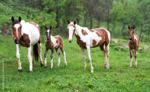 Foto beautiful family of horses, family photo horses, wild horses in nature