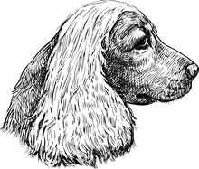 Freehand Drawing Of Profile Portrait Purebred Cocker Spaniel