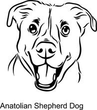 Anatolian Shepherd Dog Portrait Dog In Line Style - Pet Portrait In Light Style Head Isolated On White
