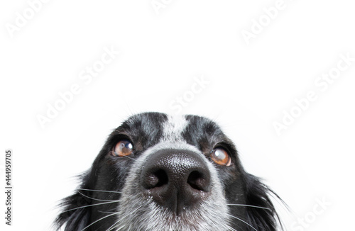 Foto Close-up border collie puppy dog isolated on white background