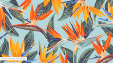 Realistic, Vector, Tropical Wallpapers With Strelitzia (bird Of Paradise) Designed For Computer Screens And Tablets, Can Be Used As Print For Clothing, Advertising Banner, Cover In Social Networks