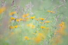 Bunch Of Blooming Orange Wildflowers On A Meadow