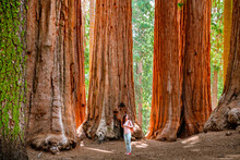 A Charming Young Woman With A Backpack Walks Among Giant Trees In The Forest In Sequoia National Park, USA