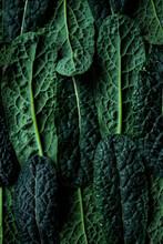 Lacinato Kale Superfood Leaves Pattern