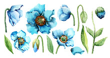 Set Of Isolated Elements Of Garden Blue Poppy Flowers, Buds, Green Leaves And Stems. Flower Collection. Hand Drawn Watercolor Painting On White Background For Design Of Wedding Invitations, Cards.
