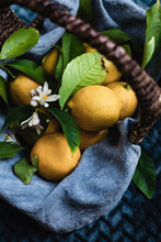 Homegrown Lemons, Freshly Picked In A Wicker Basket