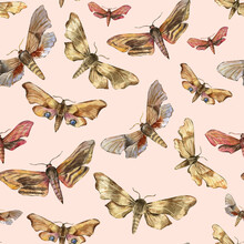 Hawk Moths Butterflies. Nocturnal Insects. Hand-drawn Realistic Illustration. Seamless Watercolor Pattern For Design Wallpaper, Fabric, Paper