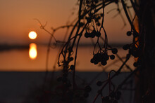 Closeup Of Tree Branches In Dim Lighting And A Blurry Golden Sunset In The Background