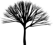 Skinny Tree Silhouette