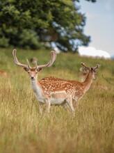 Nice Shot Of Deer In Wildernes