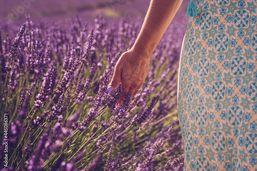 Obraz na plátně Close up of woman hand with colorful nail touching and feeling lavender flower i