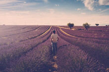 One Standing Man Look The Lavender Field Around Him - Human And Beautiful Travel Scenic Nature Outdoors - France Provence Valensole Location - Fragrance And Parfums Production Business