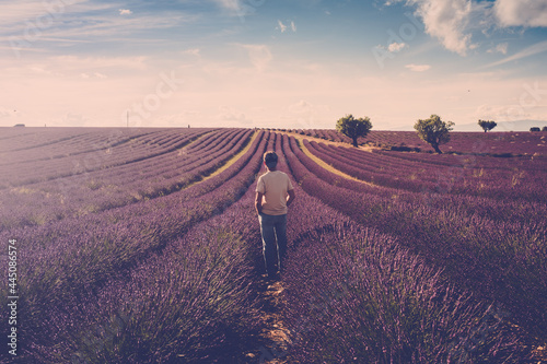 Fotografie, Obraz One standing man look the lavender field around him - human and beautiful travel