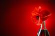 Leinwandbild Motiv Vase with beautiful red poppy flowers on color background, closeup