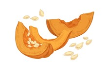 Autumn Composition Of Fresh Raw Pumpkin Pieces With Scattered Seeds. Cut Parts Of Fall Orange Vegetable Drawn In Vintage Style. Realistic Detailed Vector Illustration Isolated On White Background