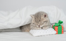 Tabby Kitten Sleeps Under White Blanket With Gift Box.  Empty Space For Text