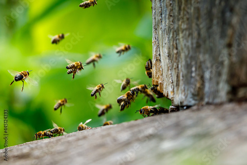 Canvas Print A swarm of honey bees at the bee house