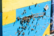 Bees Fly Into The Hive On A Sunny Day