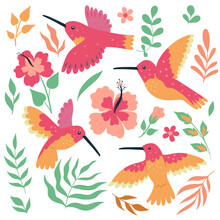 Set Of Hummingbird Birds And Flowers Isolated On White Background. Vector Graphics.