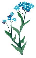Blue Eyed Grass, Wildflower Vegetation Botany