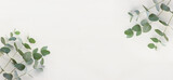 Top view image of eucalyptus composition on white wooden background .Flat lay. banner