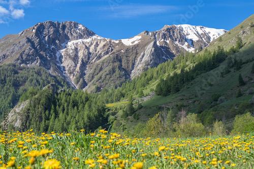 Fotografía Floraison printanière en Savoie