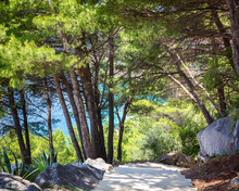 Croatia, The Coast Of Dalmatia, The Resort Town Of Brela. Summer Seascape With Pine Trees And A Staircase Going Down To The Emerald Blue Purest Adriatic Sea. Summer Vacation In Europe