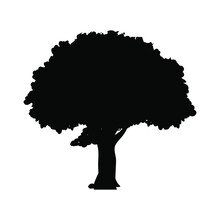 Tree Icon Vector Png Isolated On White Background. Tree Icon Eps 10 Vector.