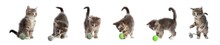 Adorable Kittens Playing With Toys On White Background, Collage. Lovely Pet