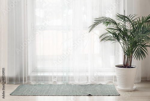Light curtains with houseplant and rug in room