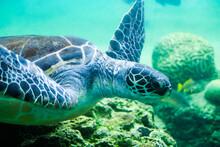 かわいい海亀