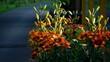 Leinwandbild Motiv Lilies