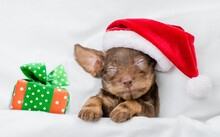 Tiny Dachshund Puppy Wearing Red Santa Hat Sleeps With Gift Box Under White Blanket At Home. Top Down View