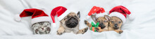 Group Of Pets - Puppies And Kitten Wearing Red Santa Hats Sleep Together Under A White Blanket On A Bed At Home. Top Down View